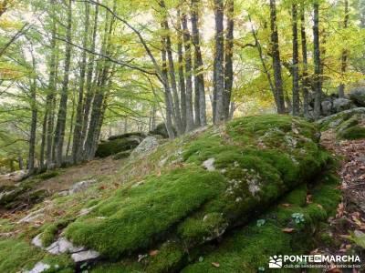 El mágico Castañar de El Tiemblo;senderismo iniciación iniciacion senderismo rutas montaña cerca